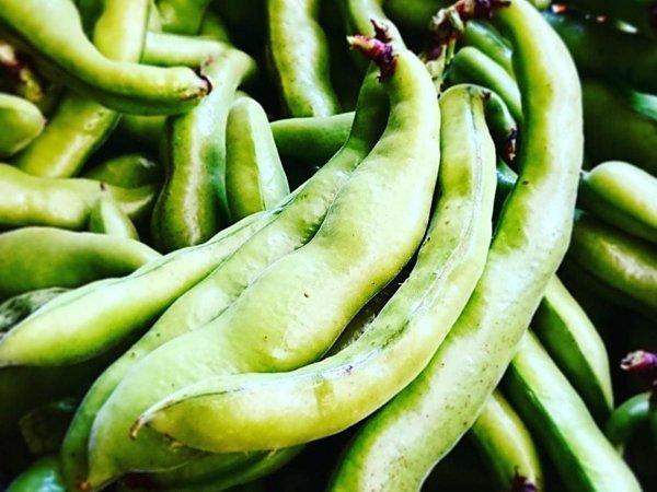 西洋空豆 ファーベ|吉野ヶ里あいちゃん農園の画像