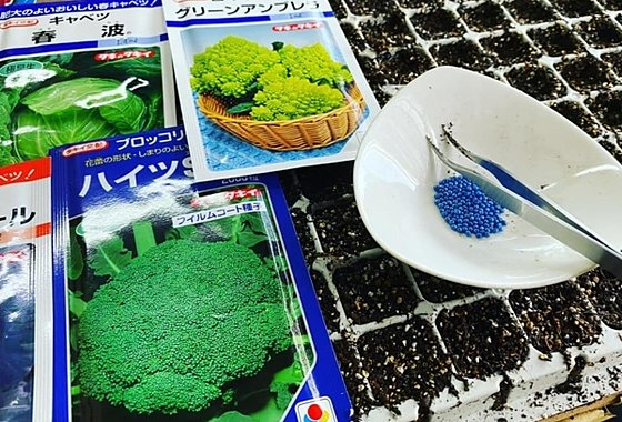 秋野菜の苗づくり 吉野ヶ里あいちゃん農園のイメージ