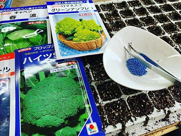 秋野菜の苗づくり|吉野ヶ里あいちゃん農園の画像