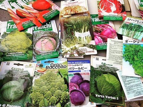 あいちゃん農園の秋冬野菜を蒔き直しの画像