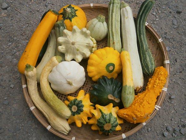 台風到来~野菜セットの出荷の画像